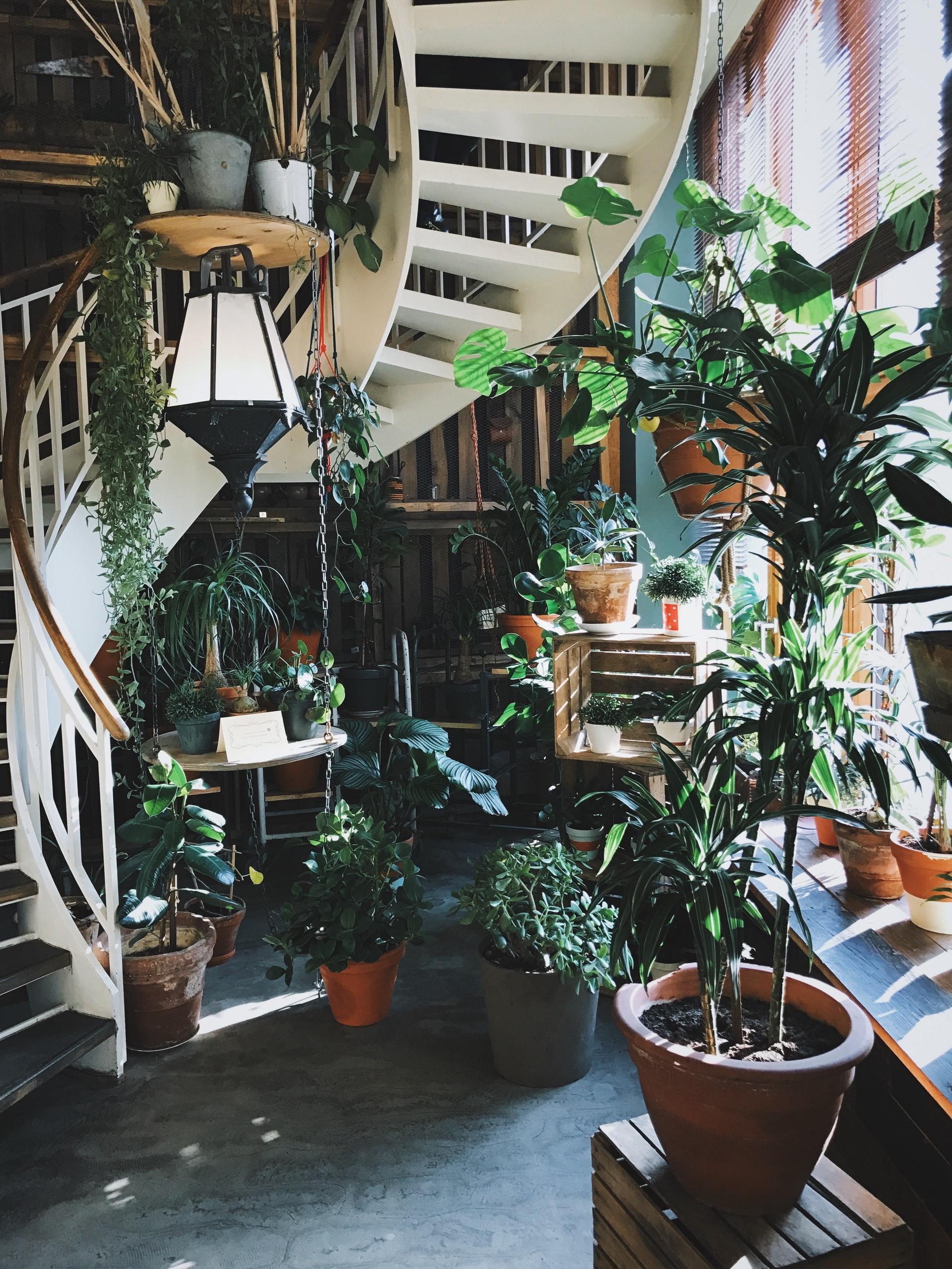 Heel veel redenen waarom jij een kamerplant moet aanschaffen